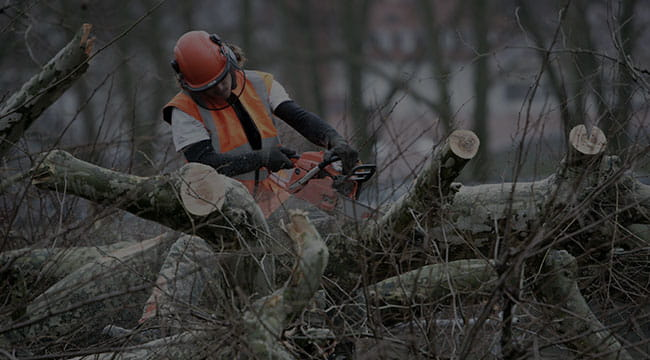 Indianapolis Tree Service